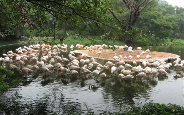 03:番禺长隆动物园,大马戏