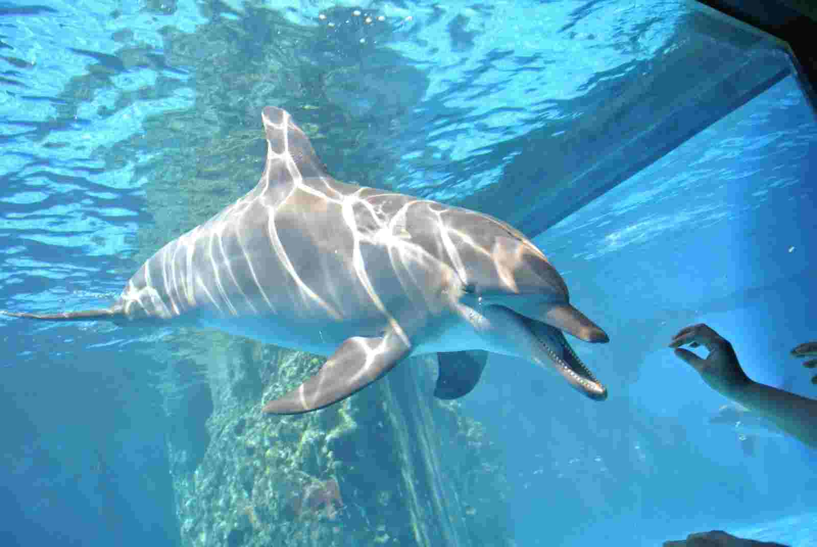 广州长隆野生动物园,大马戏,珠海长隆海洋王国两日游