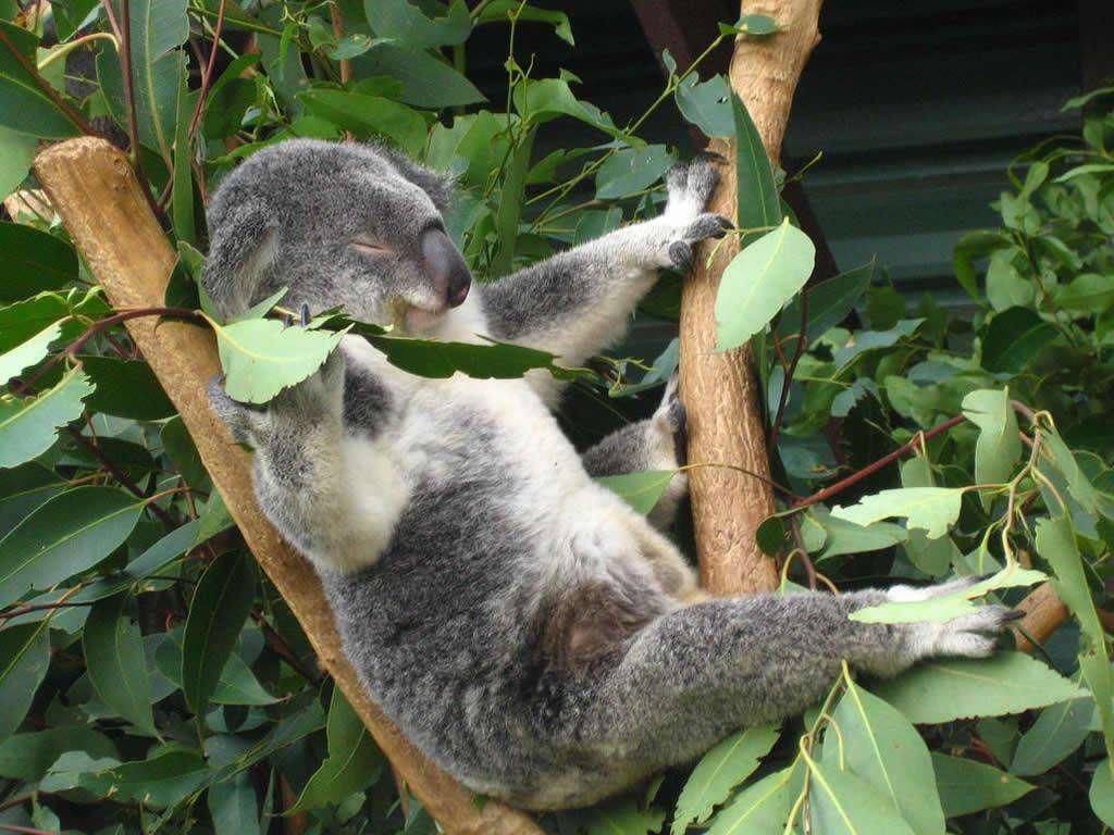 澳大利亚大堡礁8天乐淘精华游