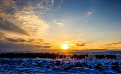 【内蒙古】呼伦贝尔大雪原、额尔古纳湿地、敖鲁古雅驯鹿、中国冷极村、明珠海拉尔、边境满洲里双飞5日游