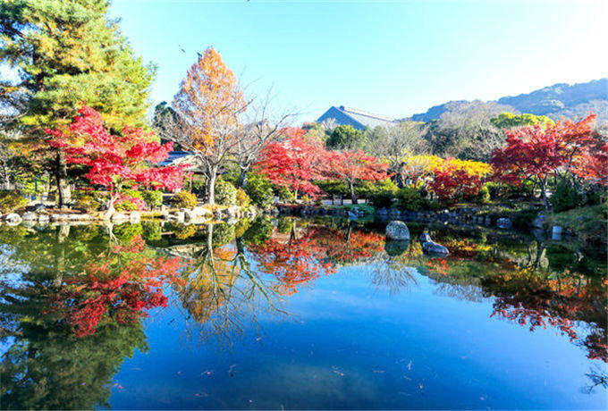 秋の物语 日本本州富士山河口湖赏枫·惠那峡怀旧街·