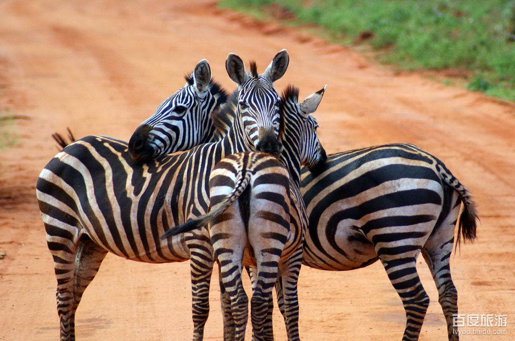 【肯尼亚】【津巴布韦】【赞比亚】【博茨瓦纳】肯尼亚津巴布韦赞比亚博茨瓦纳12天