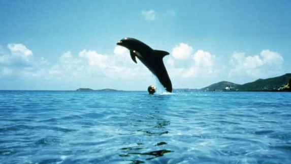 马尼拉+海豚湾直飞五天四晚游