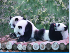 """广州【长隆野生动物世界】、大马戏(自费)、""""天然氧吧""""大夫山、沙湾古镇两日游"""