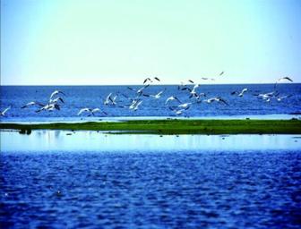 呼伦贝尔大草原、莫日格勒河、蒙部义达部落、额尔古纳湿地、中俄边境满洲里、二卡湿地景区、蒙古人游牧部落双飞六日游