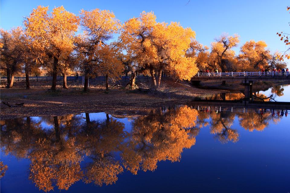轮台胡杨林·罗布人村寨·塔克拉玛干沙漠·维吾尔族家访·双飞八日游