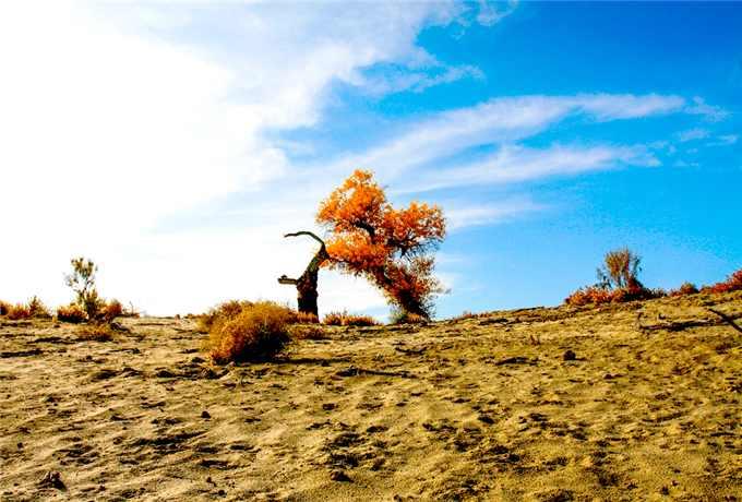 轮台胡杨林·罗布人村寨·天山神秘大峡谷·博斯腾湖·天山天池·吐鲁番双飞八日游