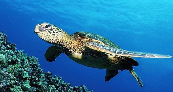 【打卡网红酒店】惠东巽寮湾一支箭、观景台、赏海龟岛2日纯玩团